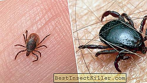 Where do ticks come from and where did they come from in Russia