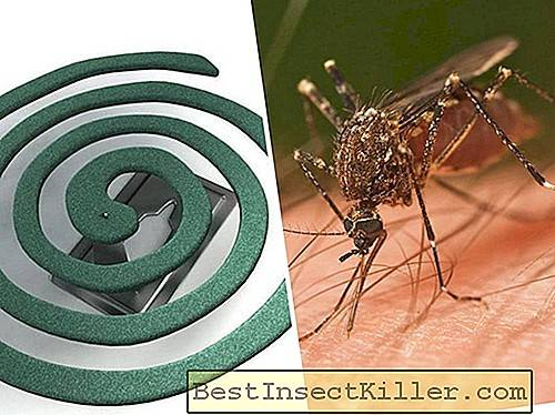 Review of spirals from mosquitoes - reviews, description and rules of use