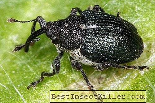 Garden pests - What threatens the appearance of a secretive gardener in the garden