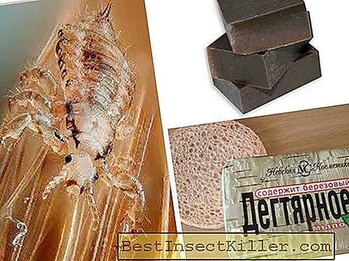 Lice and nits - Tar soap from lice - feedback and how to use