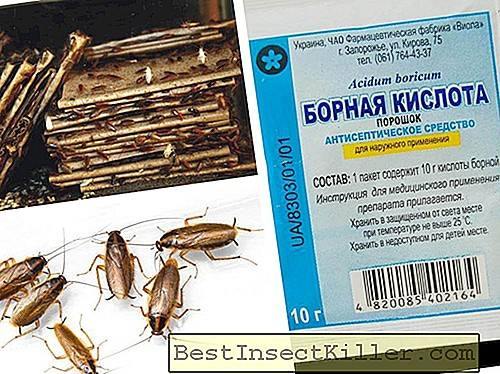 Destruction of bedbugs and cockroaches in Moscow