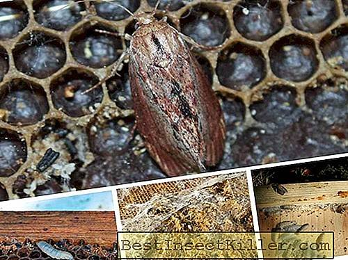 PZHVM - a product of vital activity of wax moth application
